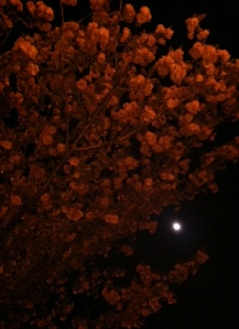 Moon blossoms