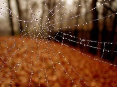 Image via http://love-of-autumn.tumblr.com/post/30998086167