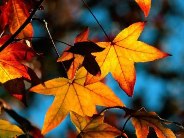 Image via http://www.layoutsparks.com/pictures/fall-leaves-0