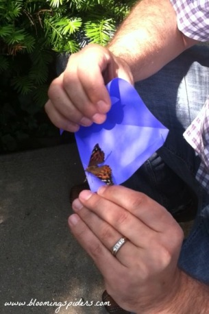 butterfly release 2015_Ren hands_pm