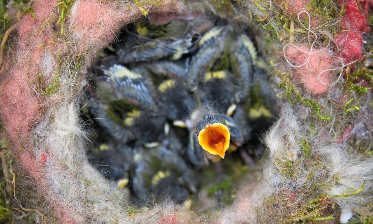 birds-nest-768809_1280